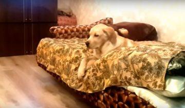 Кто ленивей всех на свете? Эта собака бьет все рекорды!