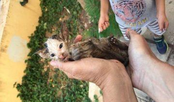 Котенок цеплялся за мусор в канаве с водой и пытался спастись