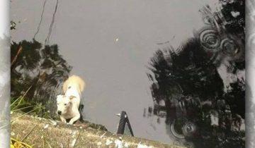 Собака упала в воду и отчаянно звала на помощь. Но она была не одна