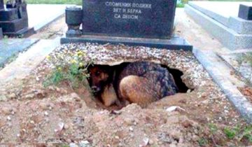 Собака лежала на могиле: люди были уверены, что она скорбит по хозяину