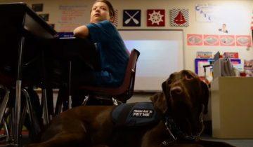 Собака, воспитанная заключенным, изменила жизнь мальчика с аутизмом
