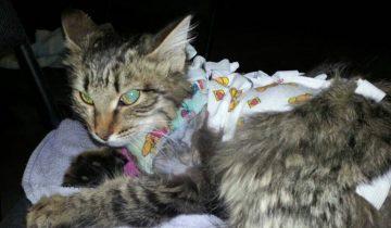 На колодце лежал маленький липкий комочек: это был раненый котенок