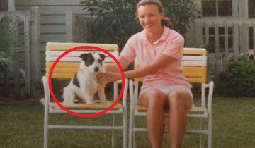 Собака посещает семью … после смерти