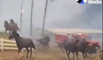 Они рисковали жизнями, чтобы спасти лошадей от пожаров в Калифорнии