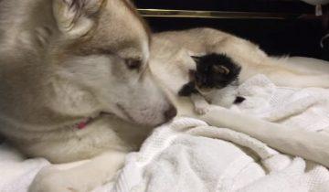 Красавица Лило стала лучшей мамой котенку Рози