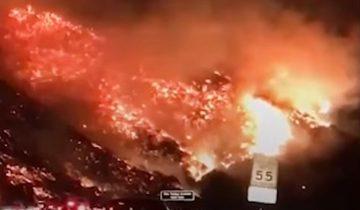 Пока горит Калифорния, герои спасают жизни братьев наших меньших
