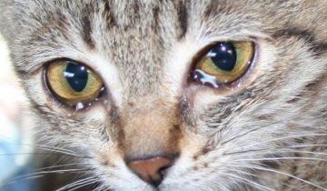 Она увидела самые несчастные глаза в мире и не прошла мимо