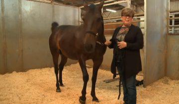Лошадь выносила и родила здоровую двойню