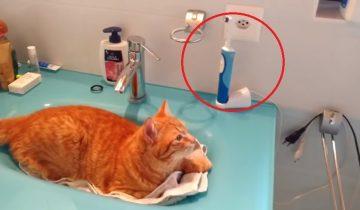 Кот обожает… электрическую зубную щетку