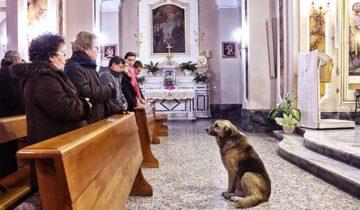 Каждый день этот пес приходит на службу в церковь