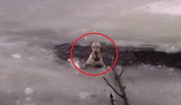 Пес обреченно тонул в ледяном озере