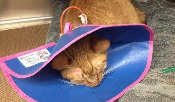 Когда кот попал в 22 года в приют, решил, что лучше умереть…