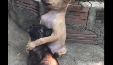 Их так и нашли: они сидели, обнимая друг друга