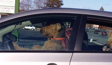 Пес терпеливо ждал в машине хозяина, но терпение было на исходе