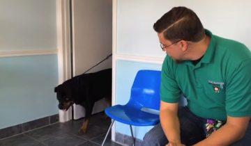 Узнает ли пес хозяина (12 млн. просмотров)