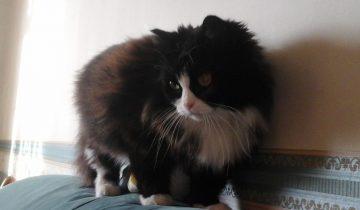 Однажды уличная кошка забрела во двор. С этого начались чудеса