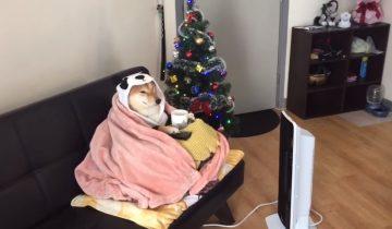 Эта собака во всеоружии — праздник на пороге!