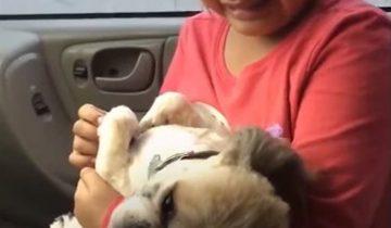 Горе малышки неутешно: ее собаку… постригли