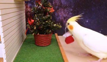 Попугаи и Рождество. Праздник нужен всем!
