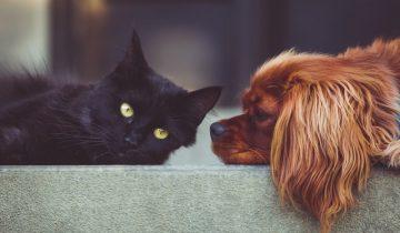 Ученые заявляют, что собаки в два раза умнее кошек