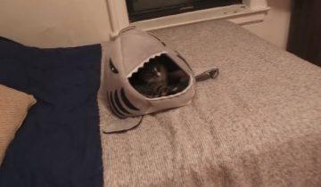 Кот еще не знает, какой сюрприз его ждет