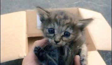 Котенка нашли, когда ему было 5 недель: он нуждался в мамочке…