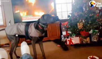 Потрясающее зрелище: собака разворачивает подарок