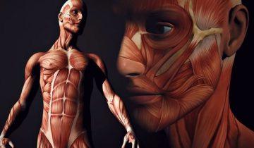 10 фактов о человеческом теле, которые не порадуют