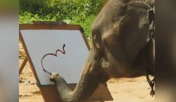 Самые умные и талантливые животные в мире