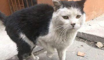 Кот потерялся в Благовещенске, а опознал его парень из Таджикистана