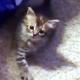 Котенок, который постукивает лапкой, стал героем интернета