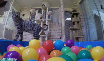 Сказка для кота — бассейн с шариками