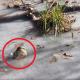Аномальные морозы в США: аллигаторы вмерзли в лед