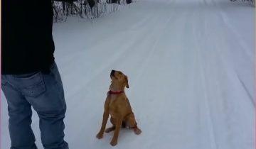 Собаки и снег: как мало нужно для счастья!