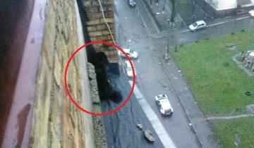 Собака упала с крыши девятиэтажки, но зацепилась за карниз