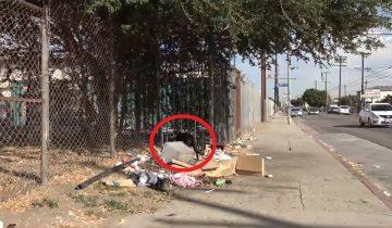 Бездомная собака питалась с мусорной свалки, а людям уже не верила
