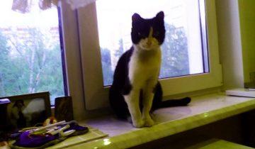 Хозяева переезжали с дачи, а кошку с котятами оставили на морозе