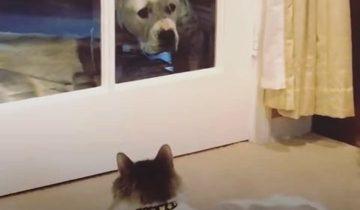 «Кошачья мама» не думала, что когда-то заведет собаку