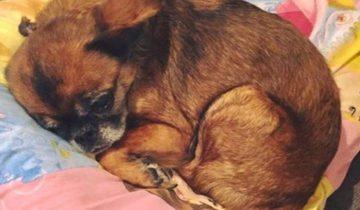 Женщина нашла свою собаку спустя 4 года. Но в каком состоянии…