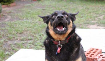 Собака в шоке: она узнала о прибавлении в семье (1 млн. просмотров)