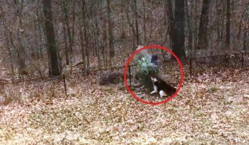 А собаки против: хозяин собрался выкинуть елку (30 млн. просмотров)