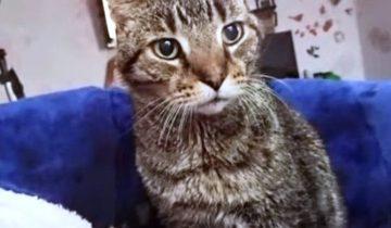 Кот трясся всем телом и прятался от каждого: как это — в 16 лет попасть в приют
