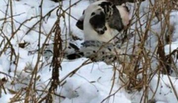 Хозяйка решила избавиться от пса: привязала к дереву в мороз