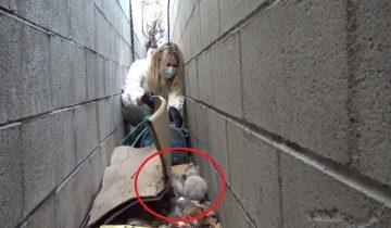 Какой сюрприз нашли волонтеры в горе мусора
