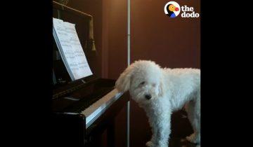 Собаки и их пристрастия: кто любит петь, кто кататься с горки