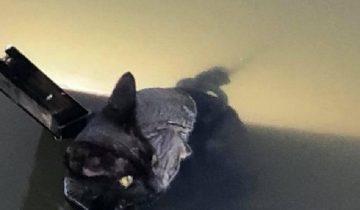 Жительница Австралии увидела в воде котенка, который не двигался с места