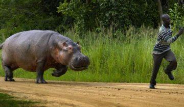 10 животных, которых лучше избегать