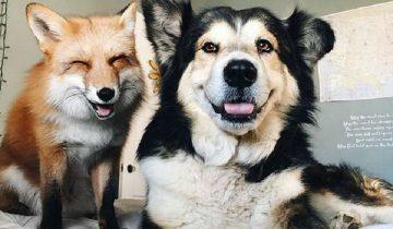 Рыжая звезда Инстаграм обзавелась другом — это пес Мус