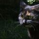 Ежедневно кошка приносит хозяину по красивому листу. Но зачем?