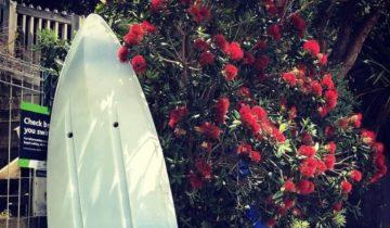 Рождественская «елка» новозеландцев: невероятно красиво
